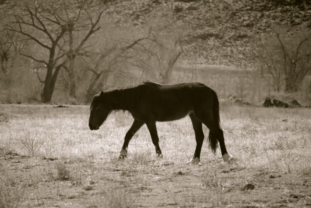 Wild Mustang | My Art's Desire