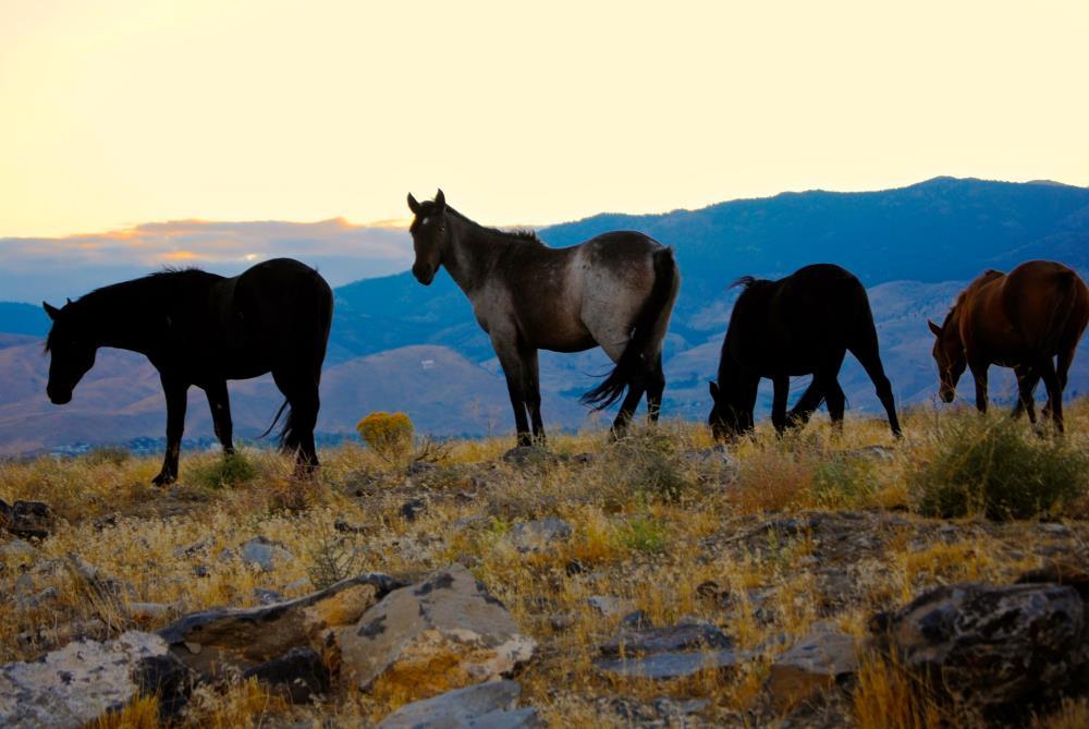 Mustang Sunset | My Art's Desire