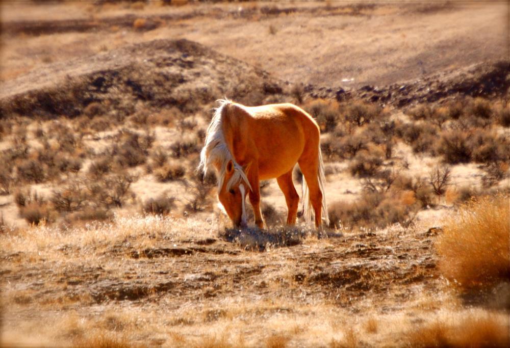 Palomino Mustang | My Art's Desire