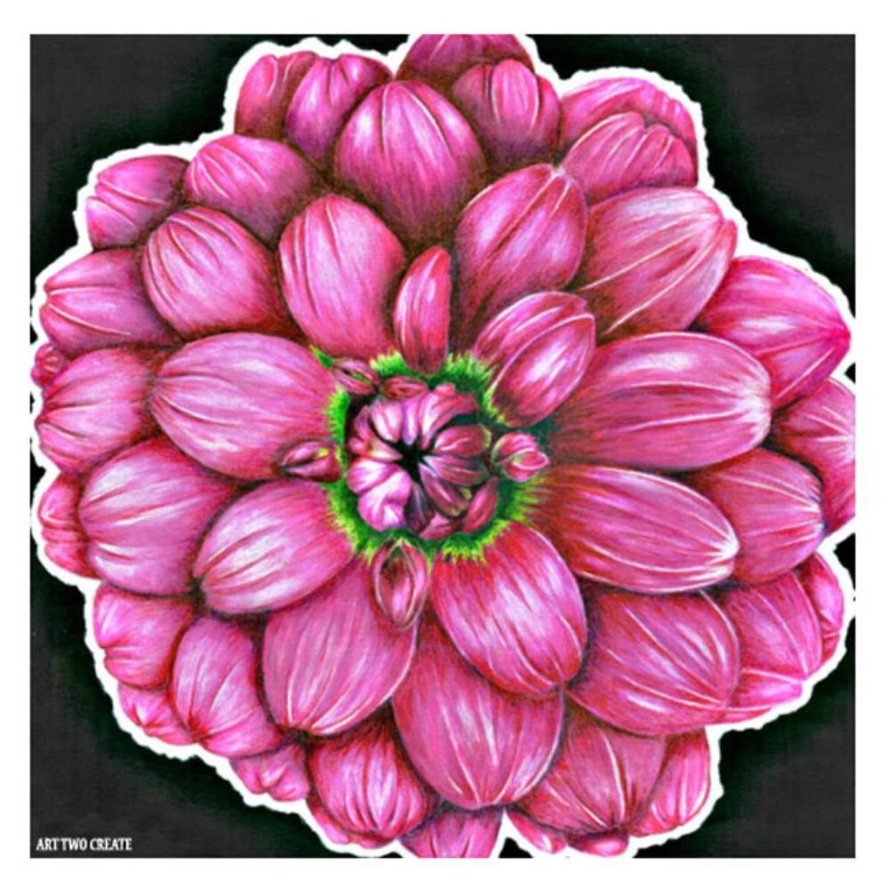 Pink Carnation | Our Artwork