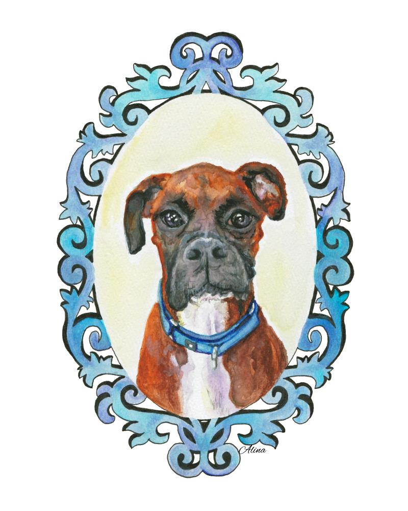 Cooper - Boxer | Alinart - nature & animal...