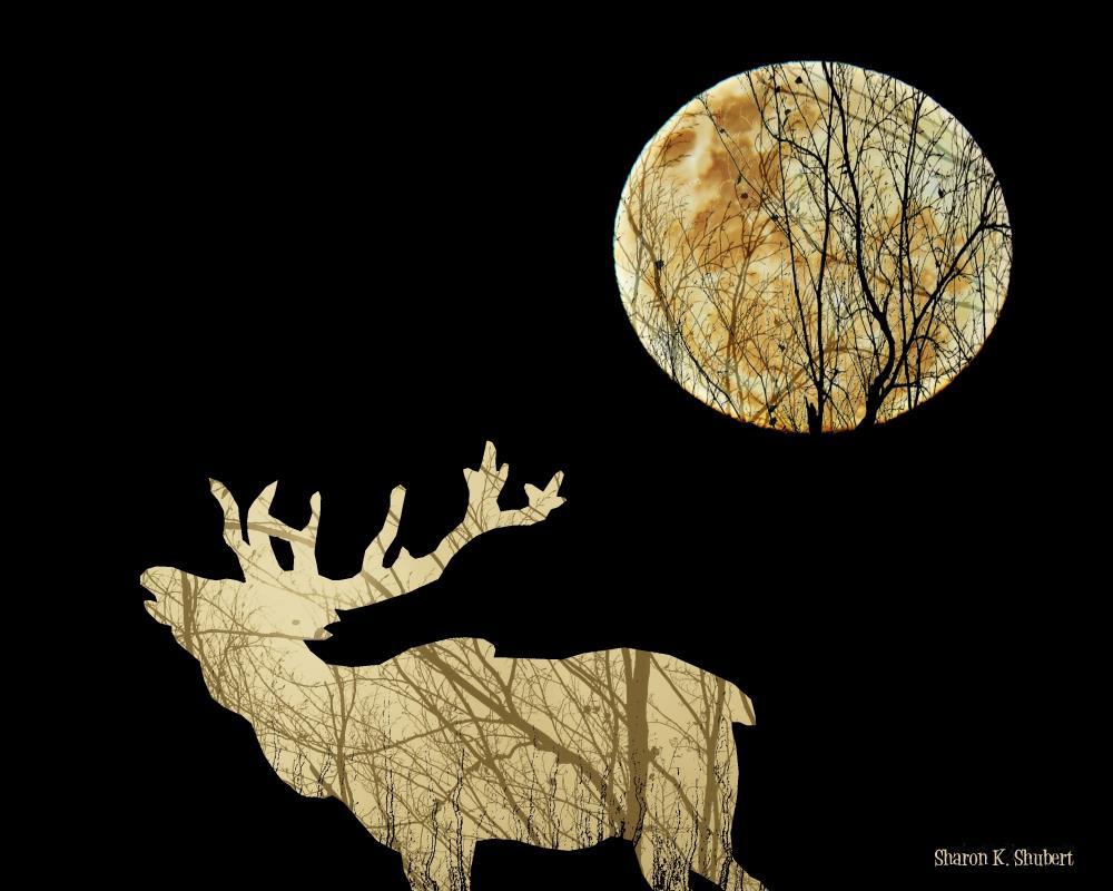 Wilderness Moon Bugling E... | Sharon K. Shubert, Artist