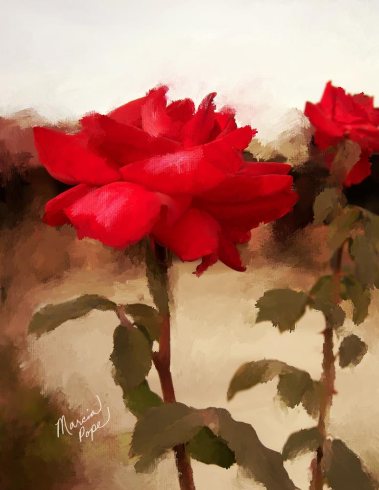Red Roses | Spare Moments Art