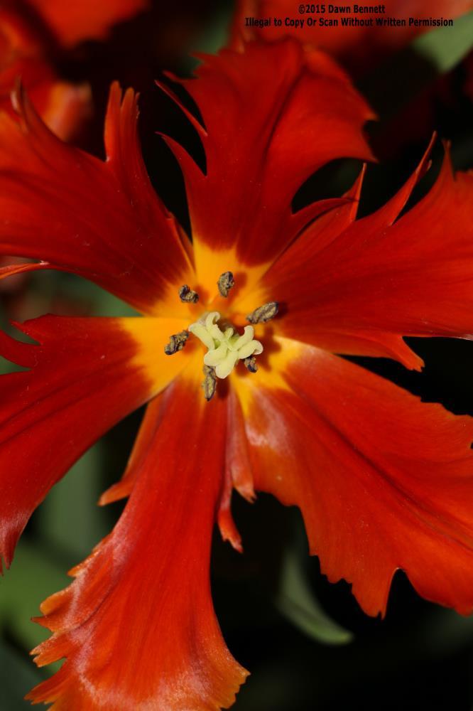 Red? | Thru Dawns Eye Photograph...