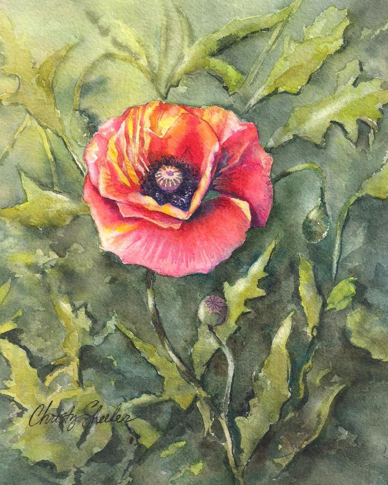 Poppy-Single-Watercolor-O... | Christy Sheeler Artist