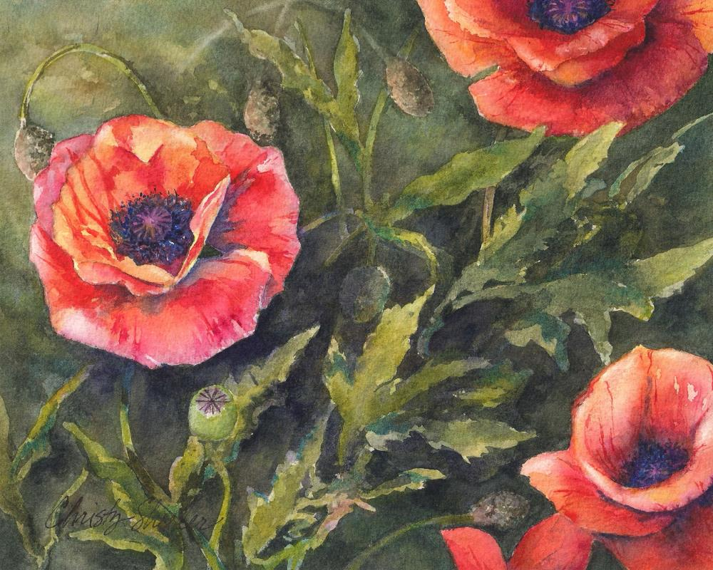 Dancing-Poppies-Watercolo... | Christy Sheeler Artist