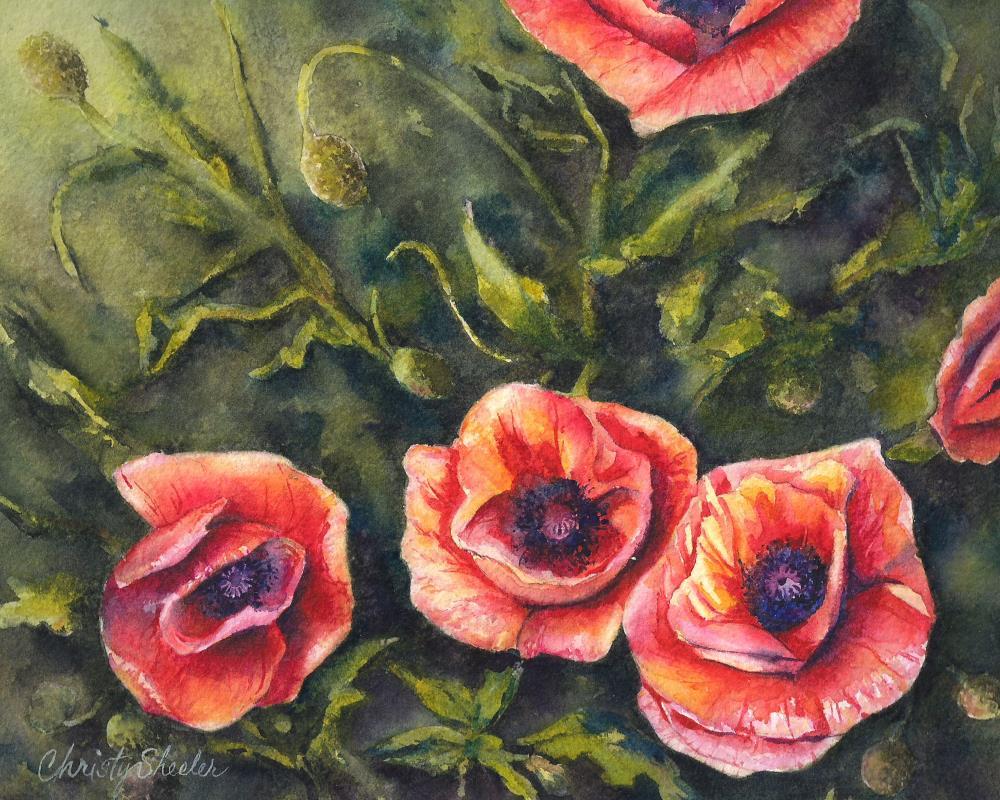 Poppies-Sunlit-Blooms-Wat... | Christy Sheeler Artist