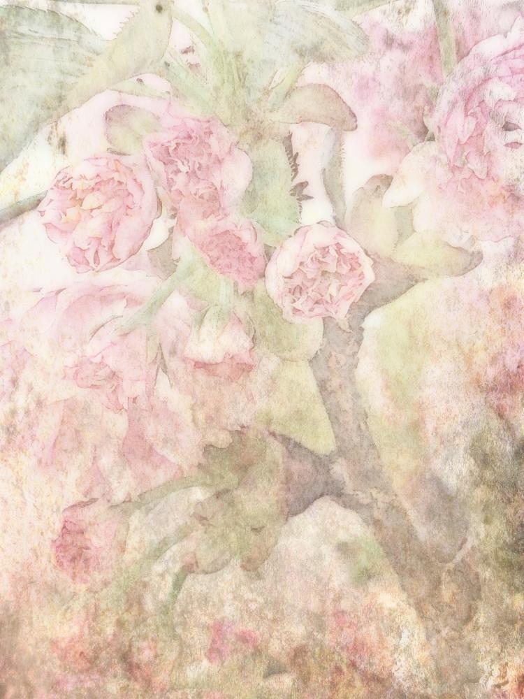 Cherry Blossom vintage  | peinture proximite`
