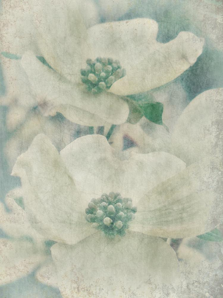 Dogwood frosted glass | peinture proximite`