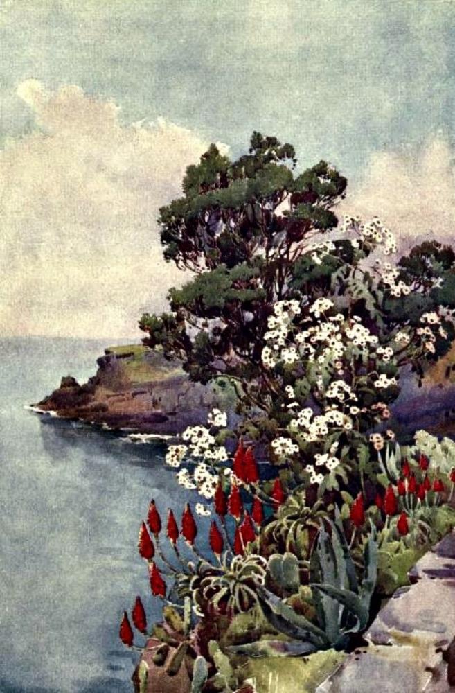 Aloes and Daisy Tree | Bella Fine Art Prints