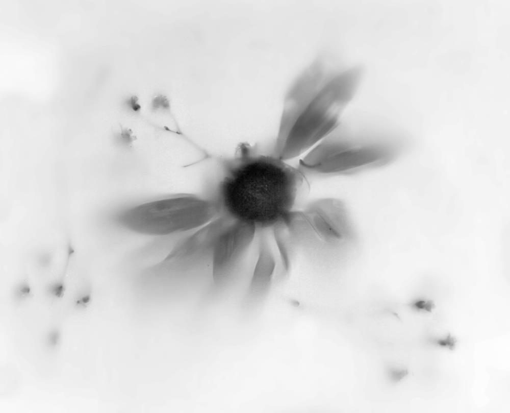 Light Flower | Prints