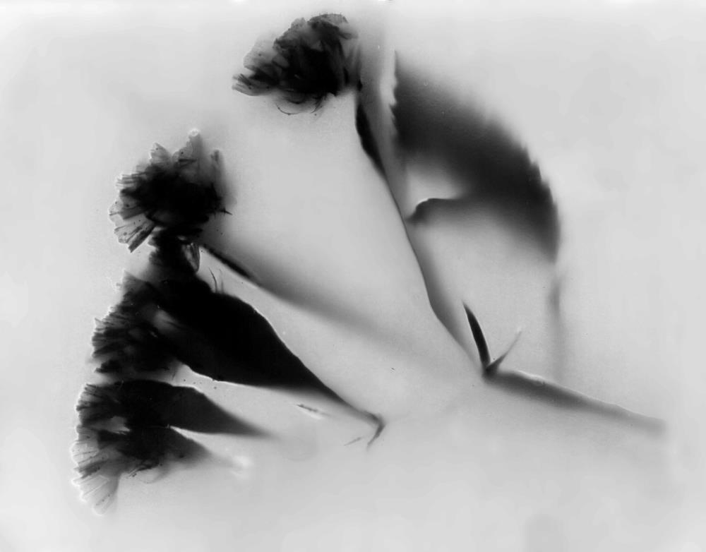 Dark Flower | Prints
