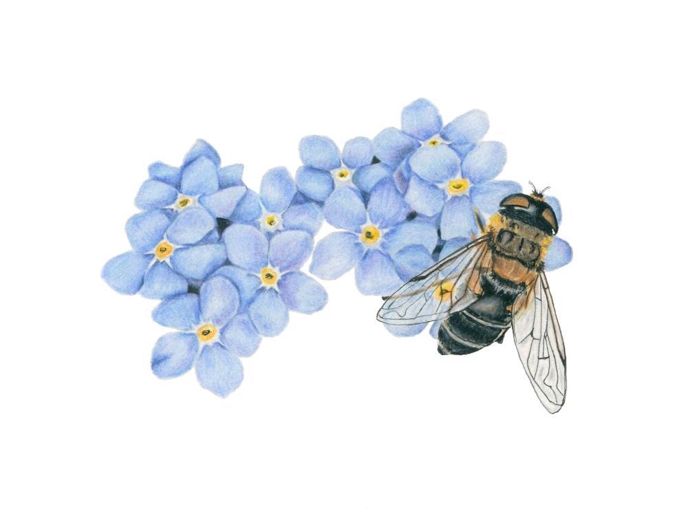 Busy Bee | Heather Wilburn Art