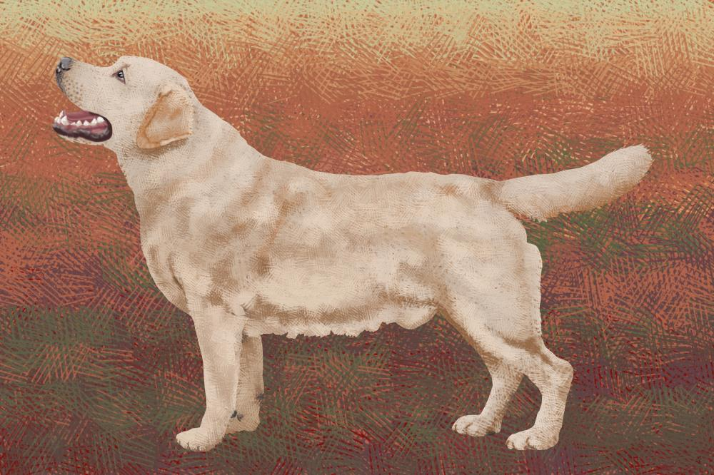 Labrador1 | Glast Art Studio Gallery