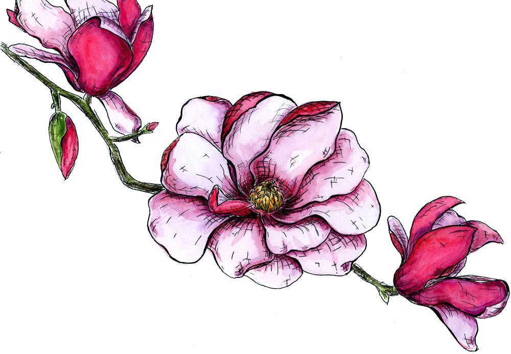 Bloomedmagnoliapainting | Lauren Watkins Art