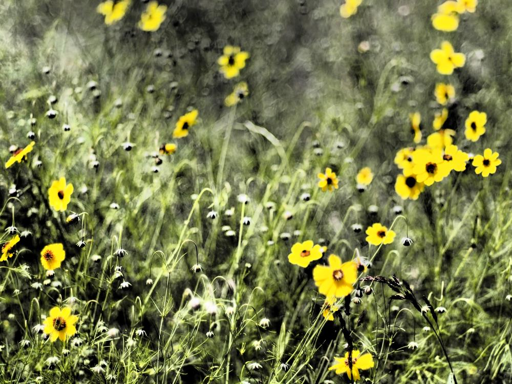 Yellow Wildflowers | Photography & Artwork