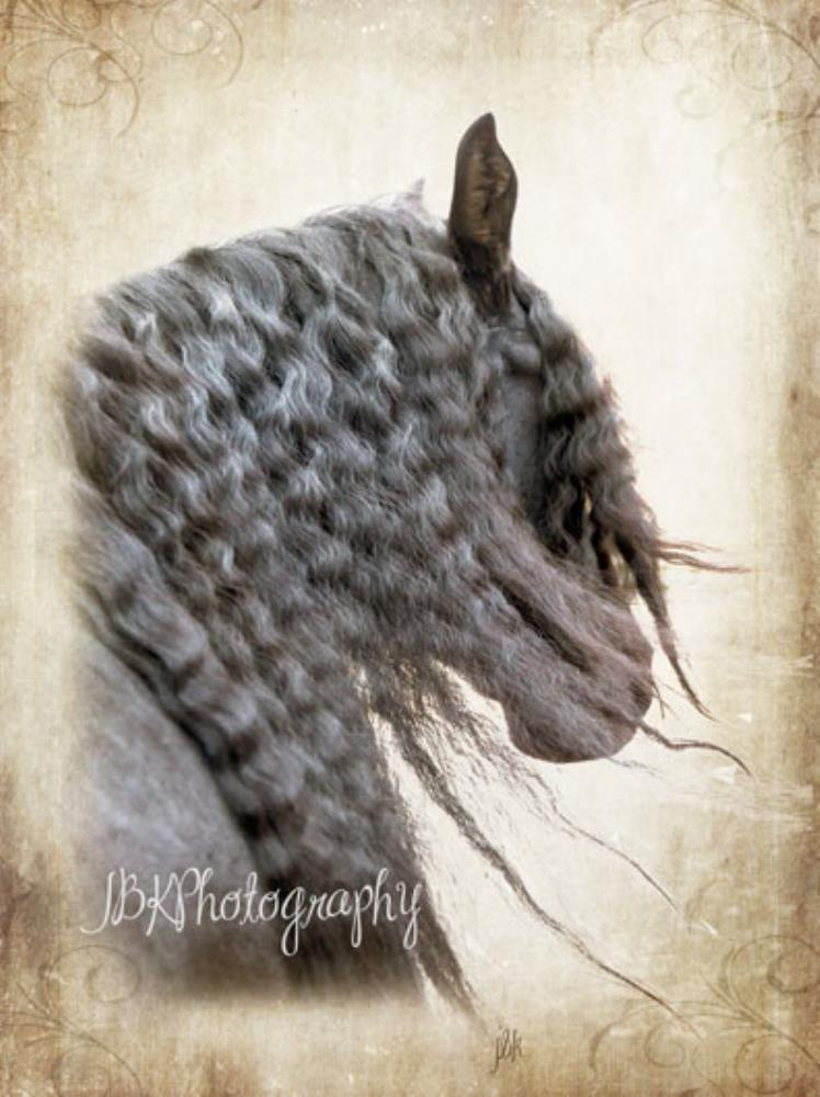 Horse flowing mane | JBK Photography