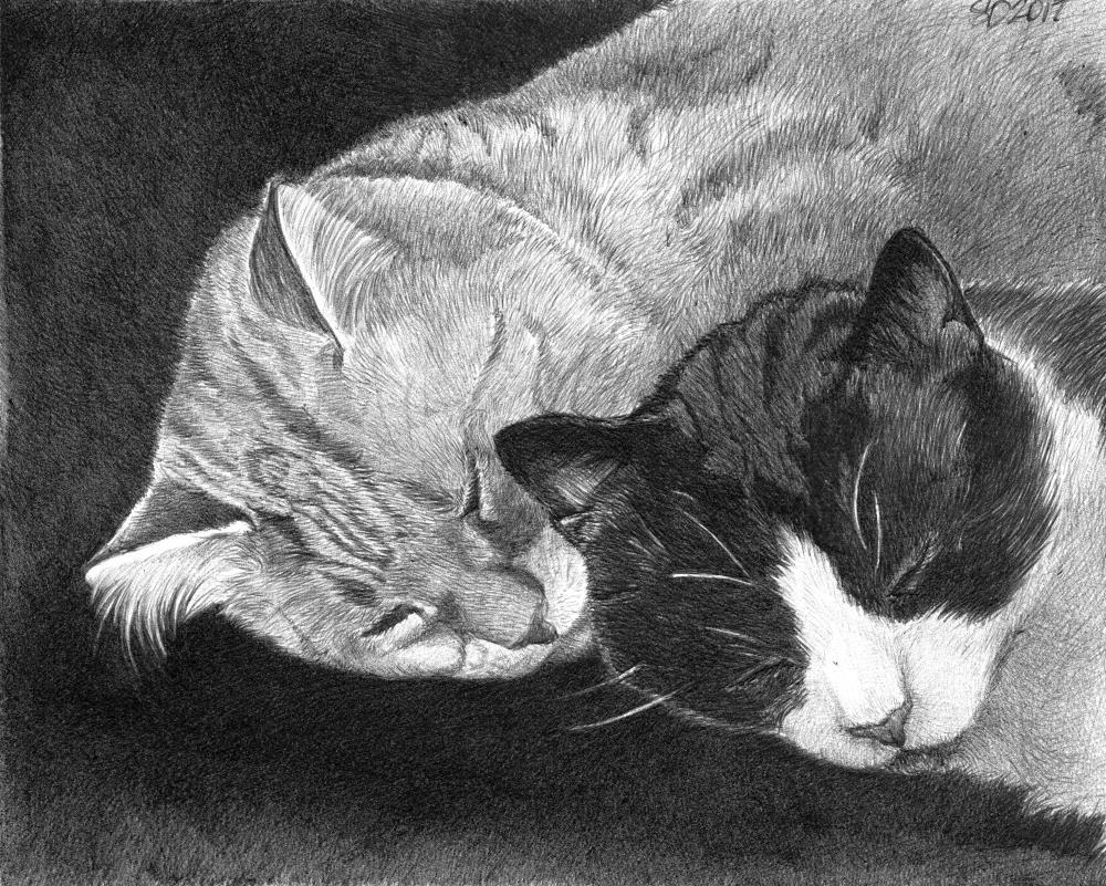 Morrissey & Azul | Faithful Faces Pet Portra...