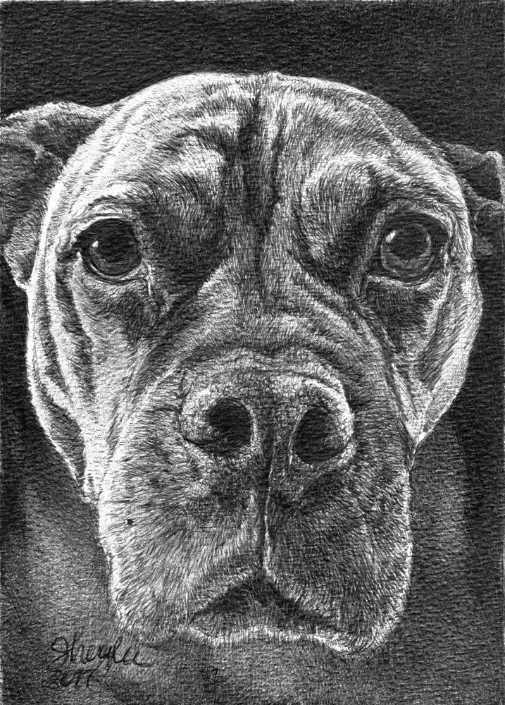 Roxy | Faithful Faces Pet Portra...