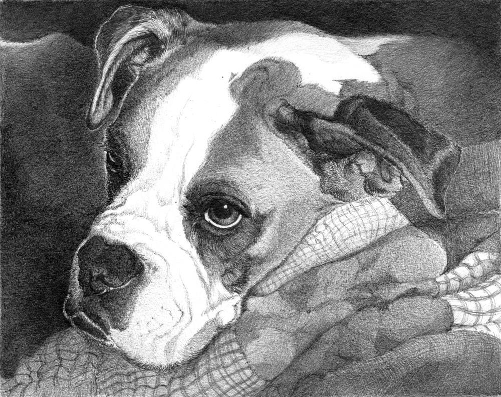 BAILEY | Faithful Faces Pet Portra...