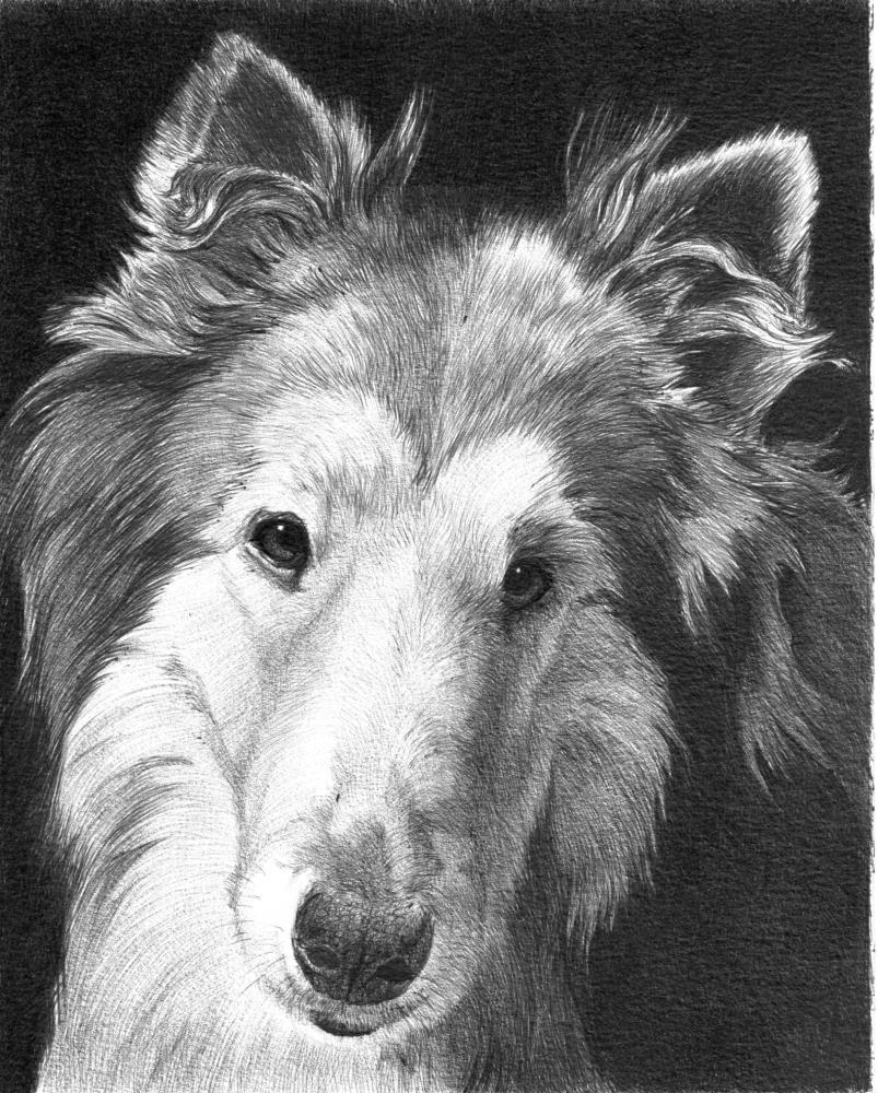 BellaD | Faithful Faces Pet Portra...