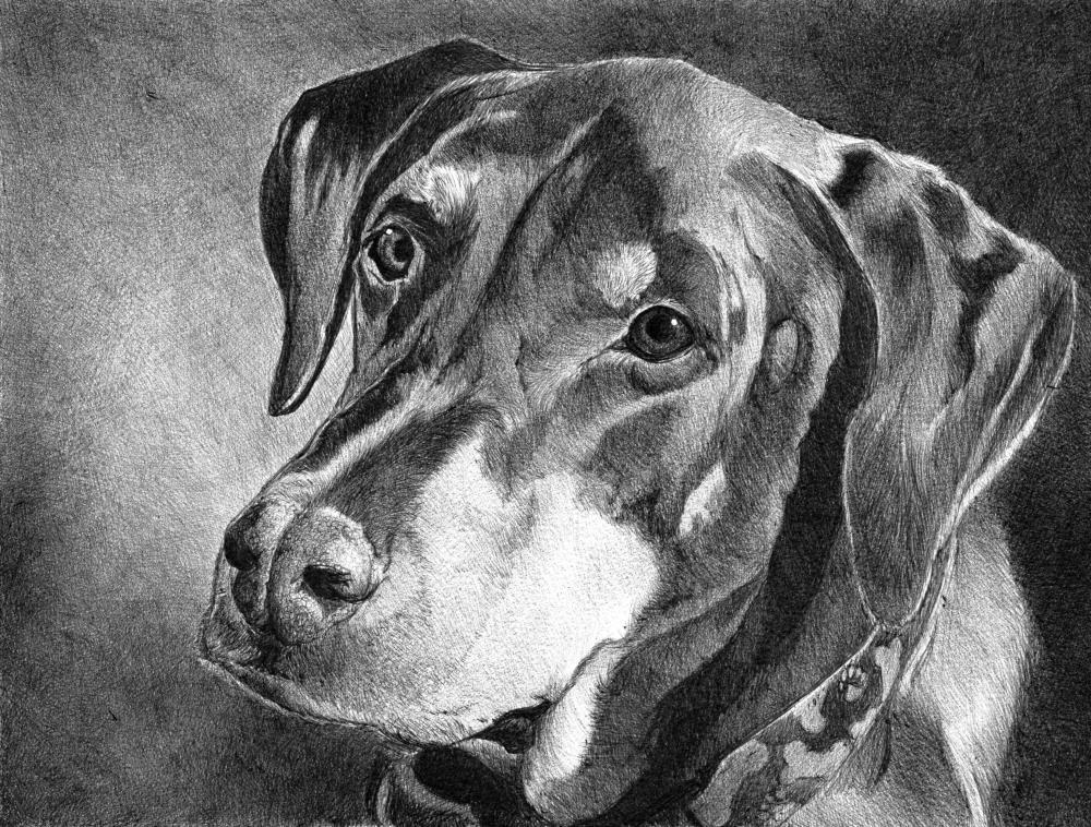 Doozy | Faithful Faces Pet Portra...