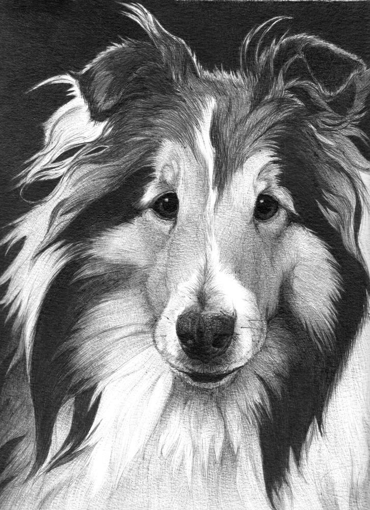 LucyG | Faithful Faces Pet Portra...