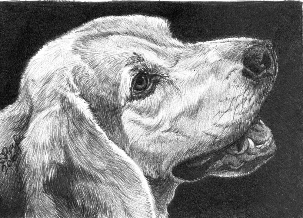 Winston | Faithful Faces Pet Portra...