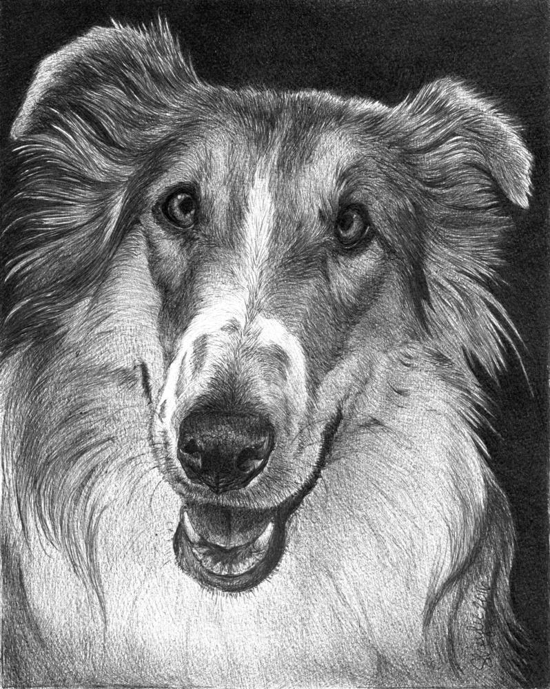 Gracie | Faithful Faces Pet Portra...