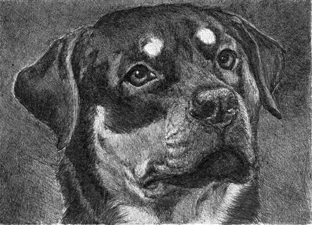 Isabeau | Faithful Faces Pet Portra...