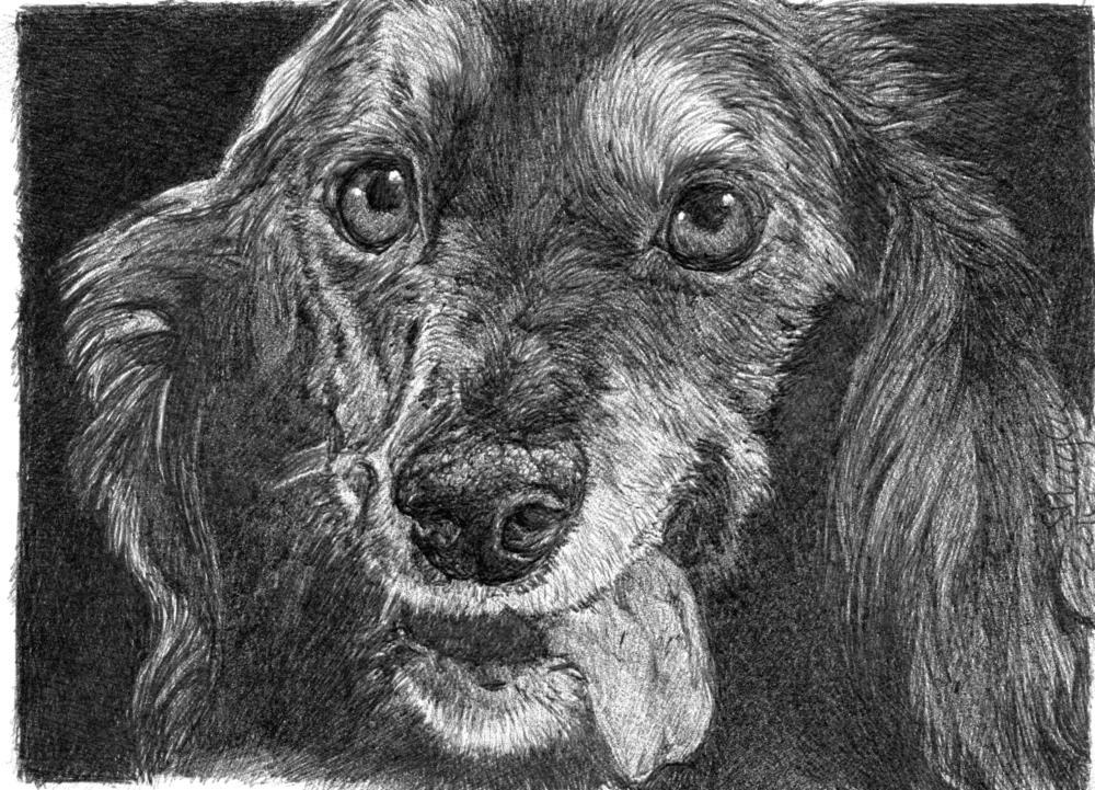 Dacky | Faithful Faces Pet Portra...
