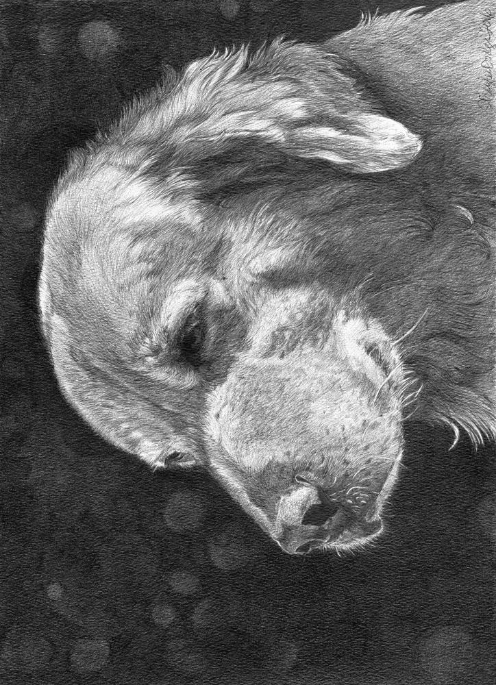 Maisie | Faithful Faces Pet Portra...