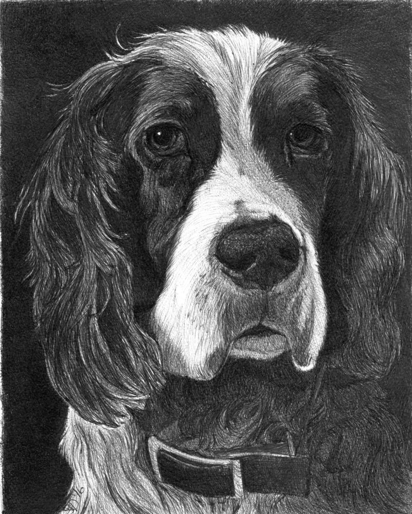 Daisy | Faithful Faces Pet Portra...