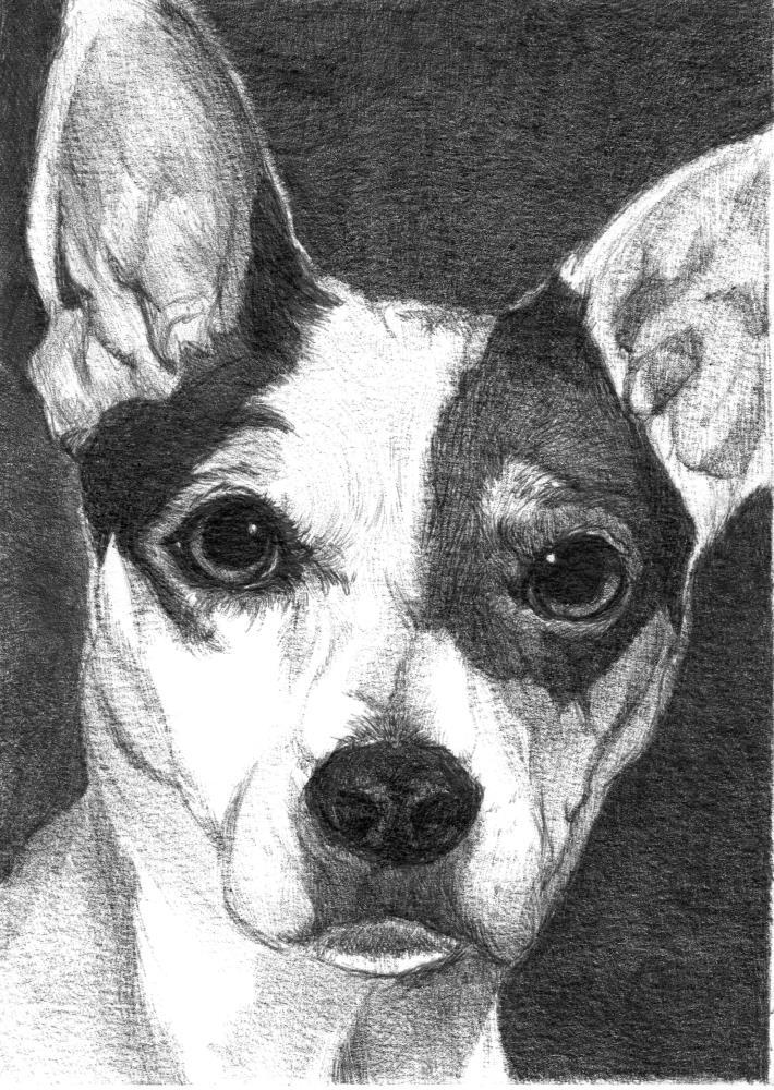 Buddy | Faithful Faces Pet Portra...