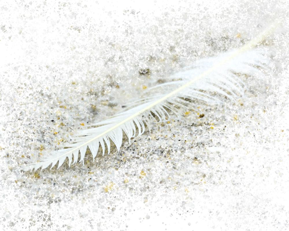 Watercolor Feather | Danielle Brown Photograph...