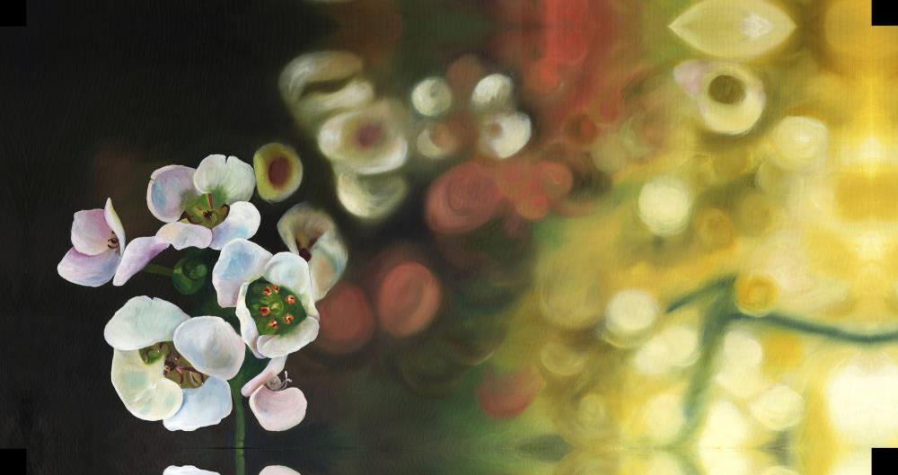 Begonia | Kerry Stafford