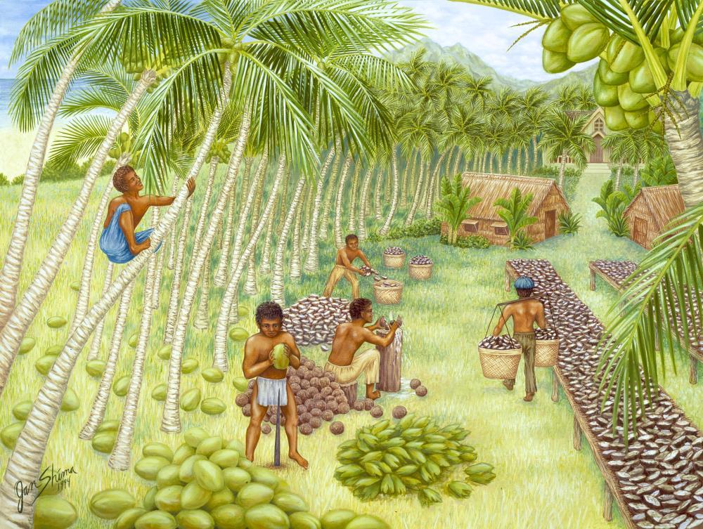 Kauai Coconut Plantation | Jan Shima Artwork