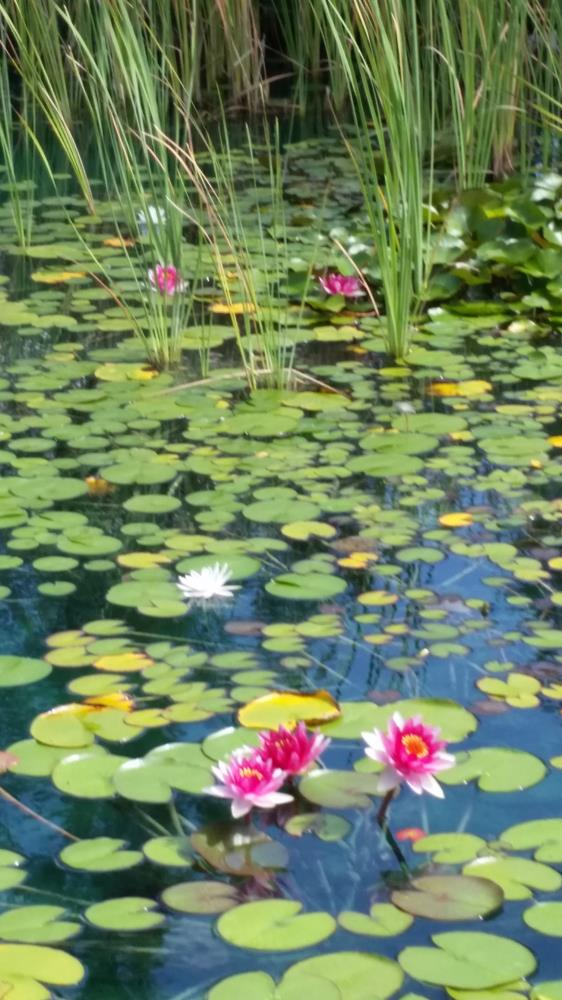 pond | Pictures to stir your sou...