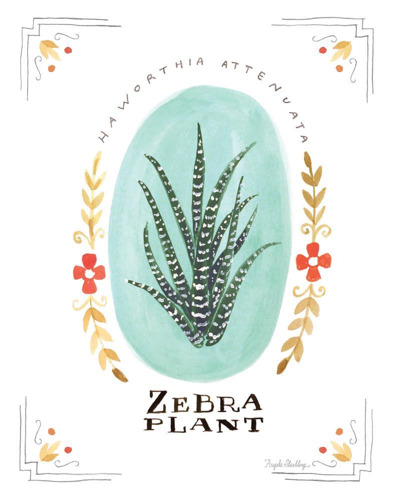 ZebraPlantPrint11x14   Angela Staehling Illustra...