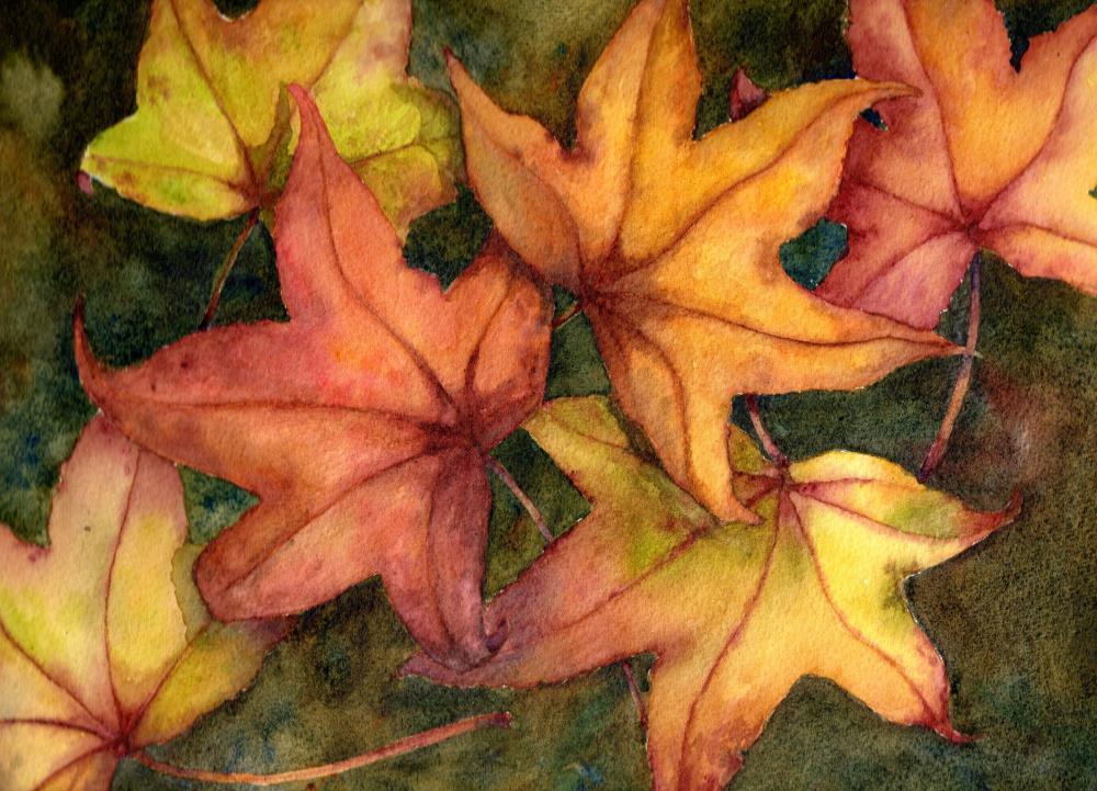 Liquid Amber Leaves   AlysLynn Fine Art