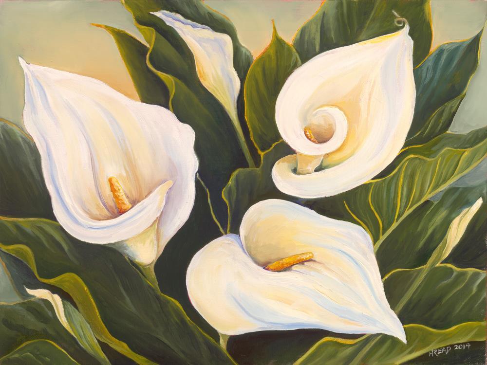 Callas at Sunrise | Helen C Read Art