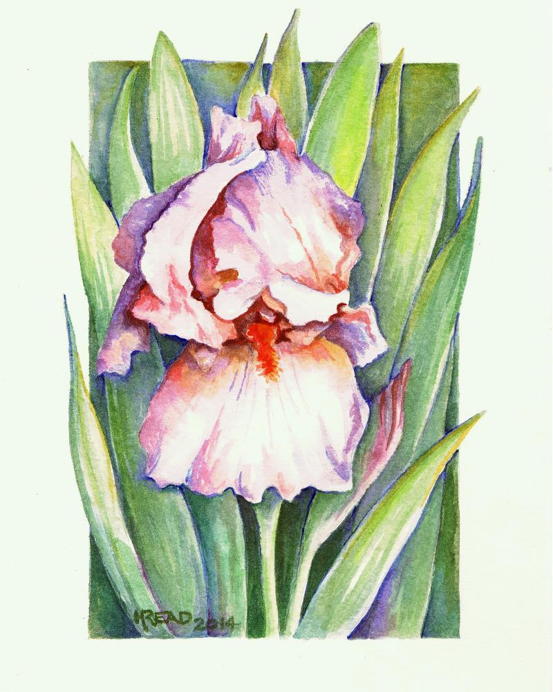 Descanso Iris 8x10 | Helen C Read Art