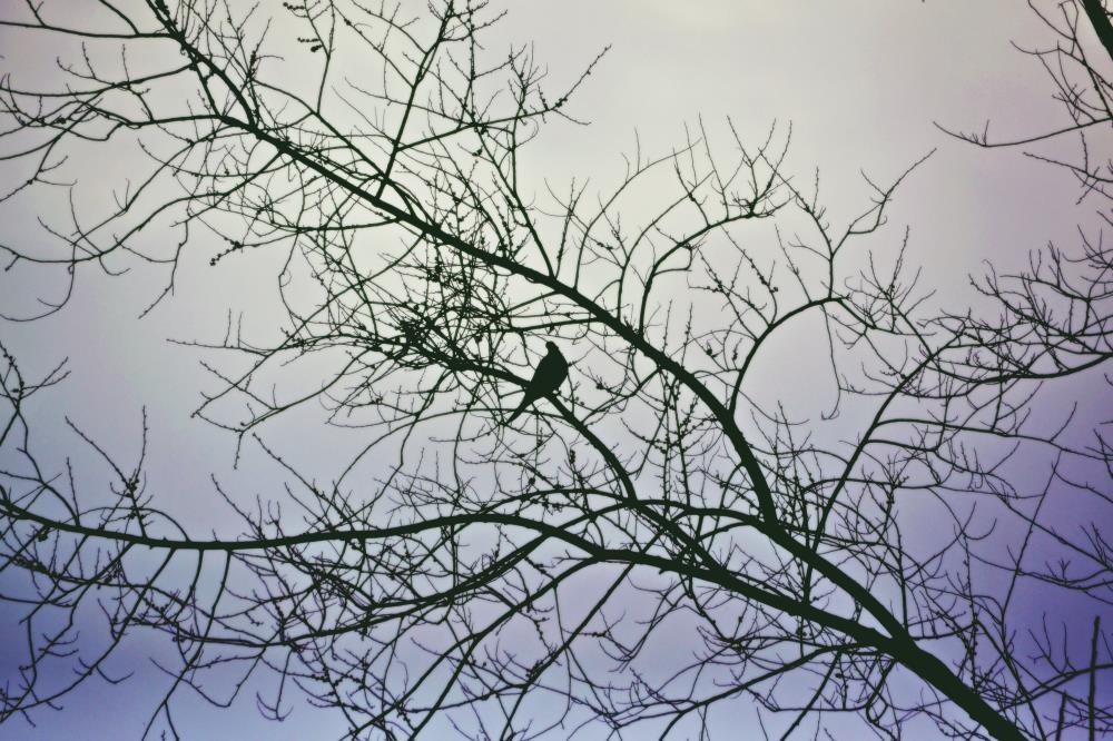 21APR, Dove Cries | Art & Photography