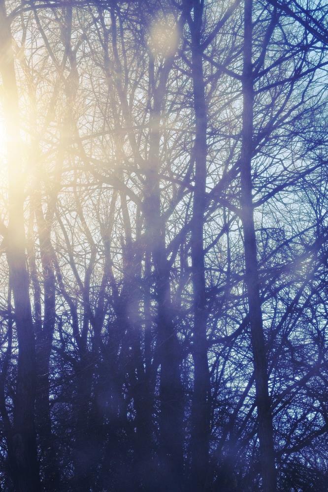 Sun through the trees   Art & Photography