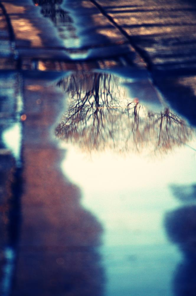 Reflection of Trees | Art & Photography