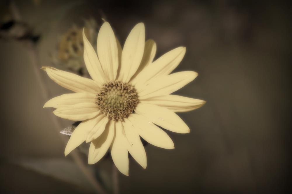 softyellow | Photography Love