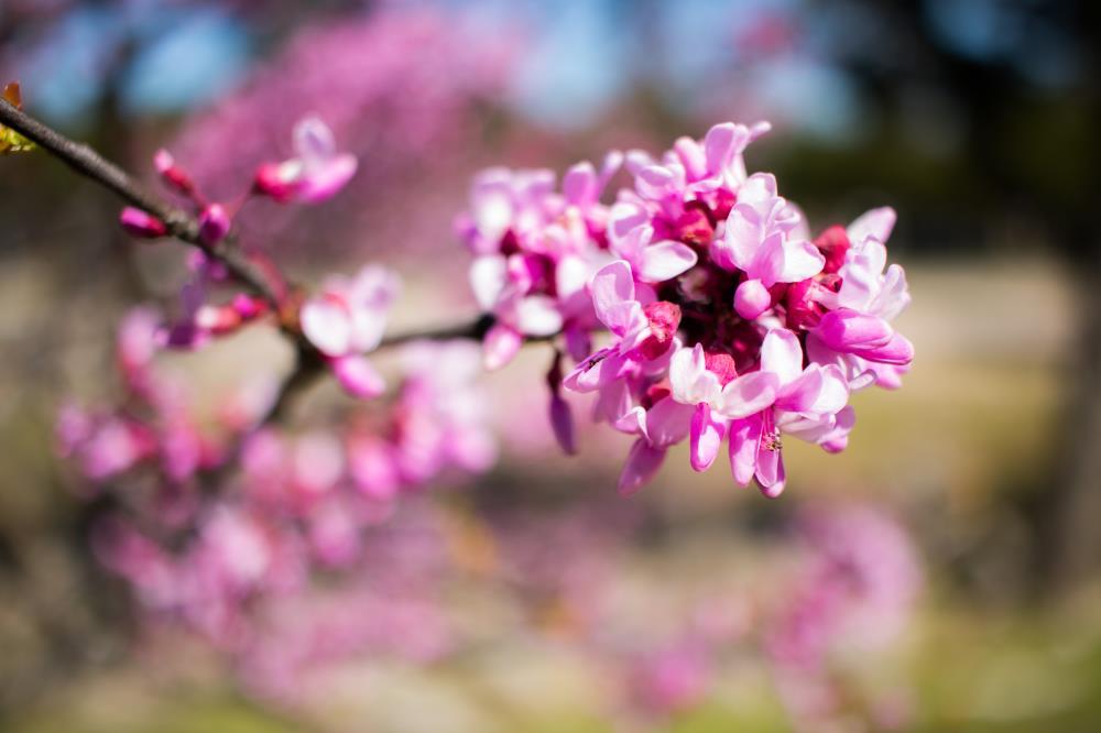Pink | Jacob Quinones Photograph...
