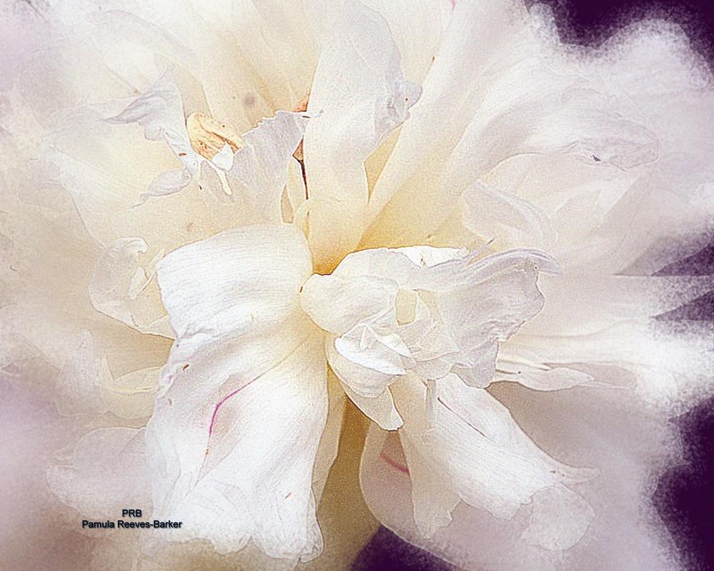 floralwhite | Pamula Reeves-Barker Arts