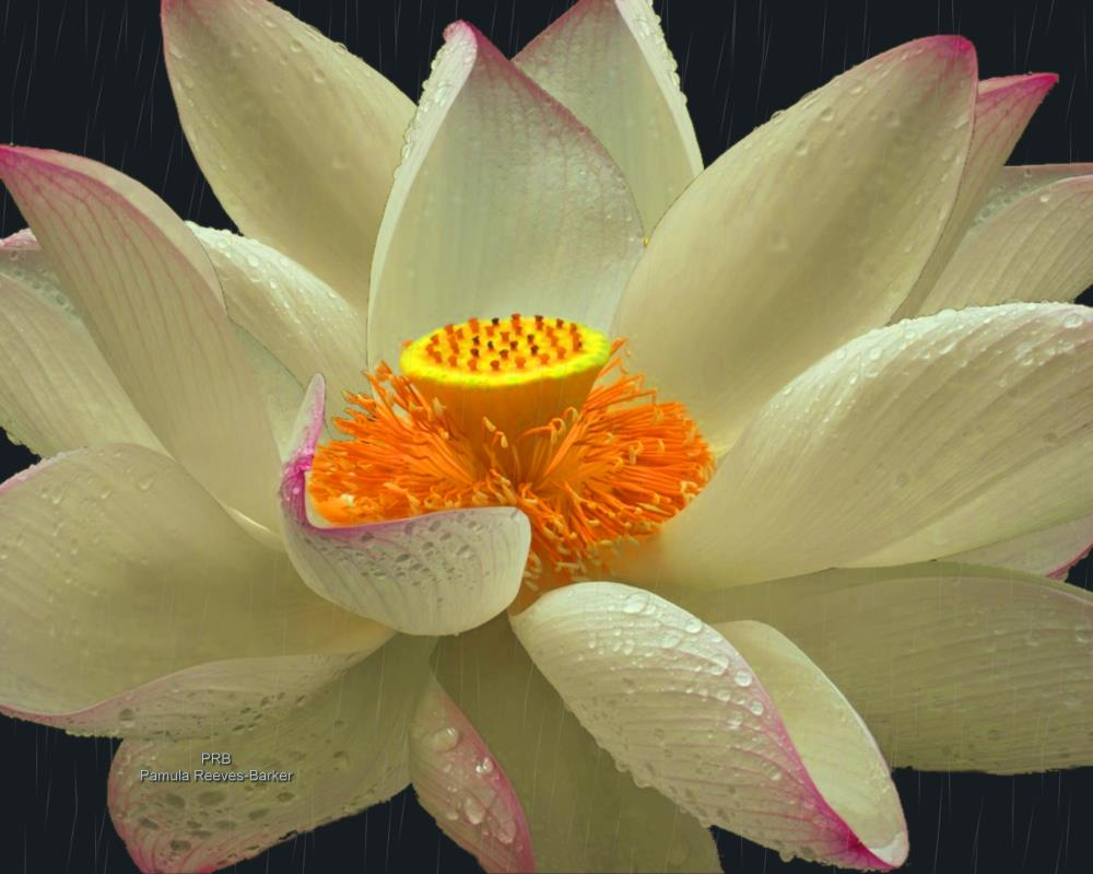 flowerinrain | Pamula Reeves-Barker Arts