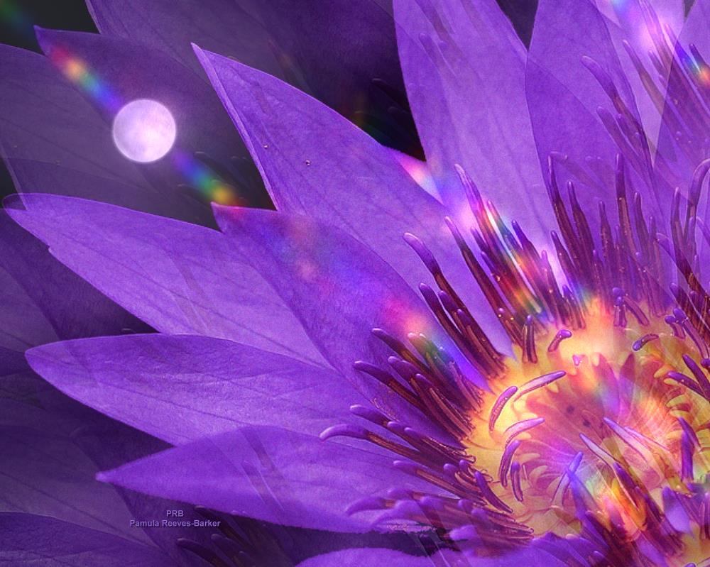 moonflower | Pamula Reeves-Barker Arts